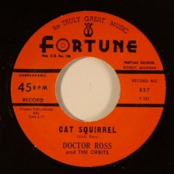Cat Squirrel /The Sunnyland""